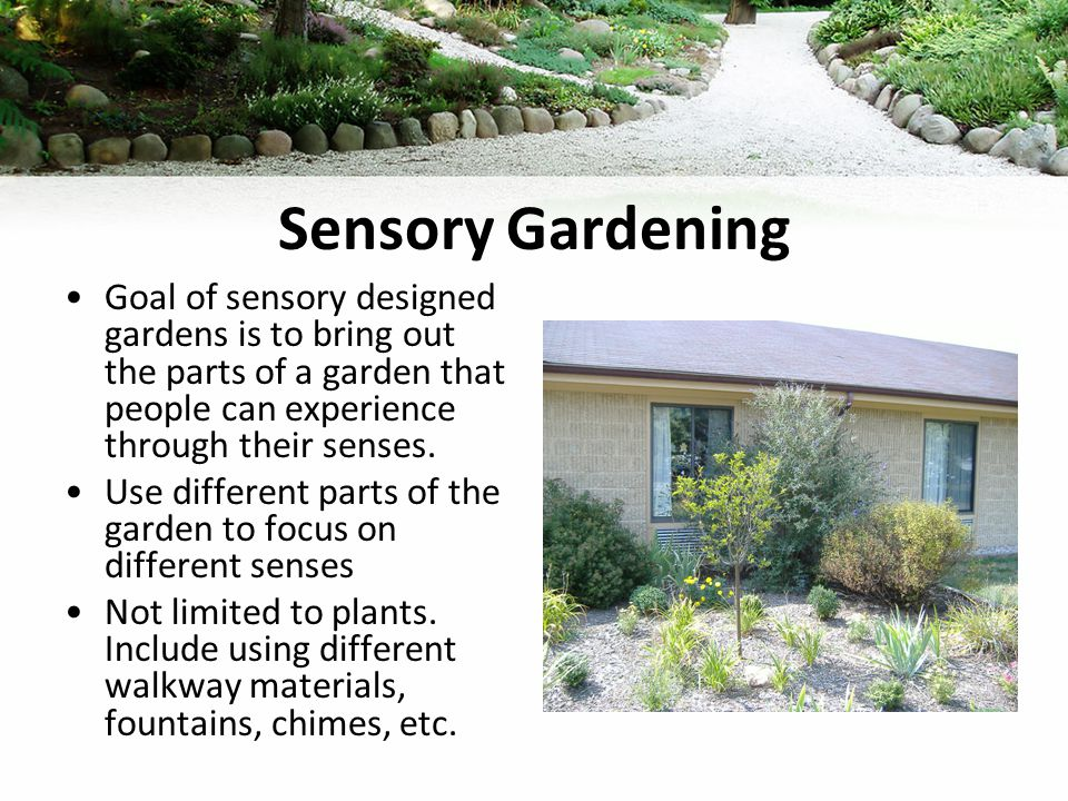 Sensory Gardening Goal of sensory designed gardens is to bring out the parts of a garden that people can experience through their senses.