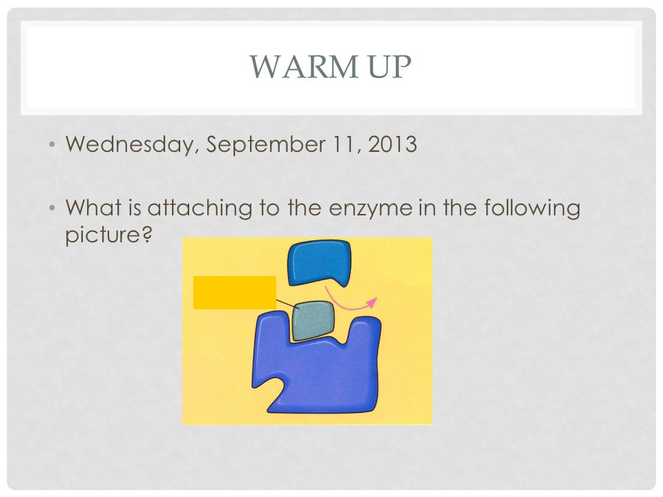 WARM UP Wednesday, September 11, 2013 What is attaching to the enzyme in the following picture