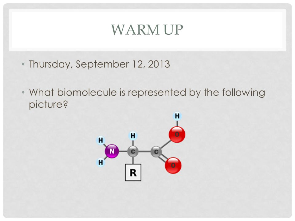 WARM UP Thursday, September 12, 2013 What biomolecule is represented by the following picture
