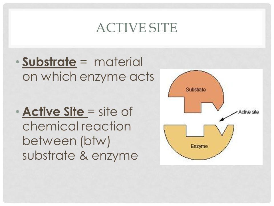 ACTIVE SITE Substrate = material on which enzyme acts Active Site = site of chemical reaction between (btw) substrate & enzyme