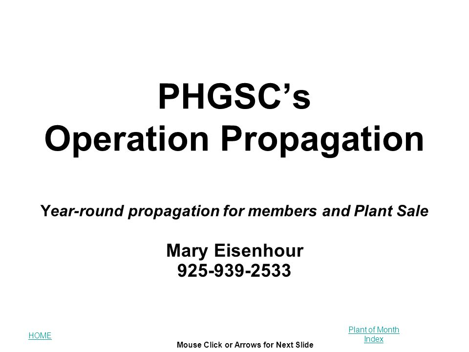 HOME Plant of Month Index Mouse Click or Arrows for Next Slide PHGSC's Operation Propagation Year-round propagation for members and Plant Sale Mary Ei