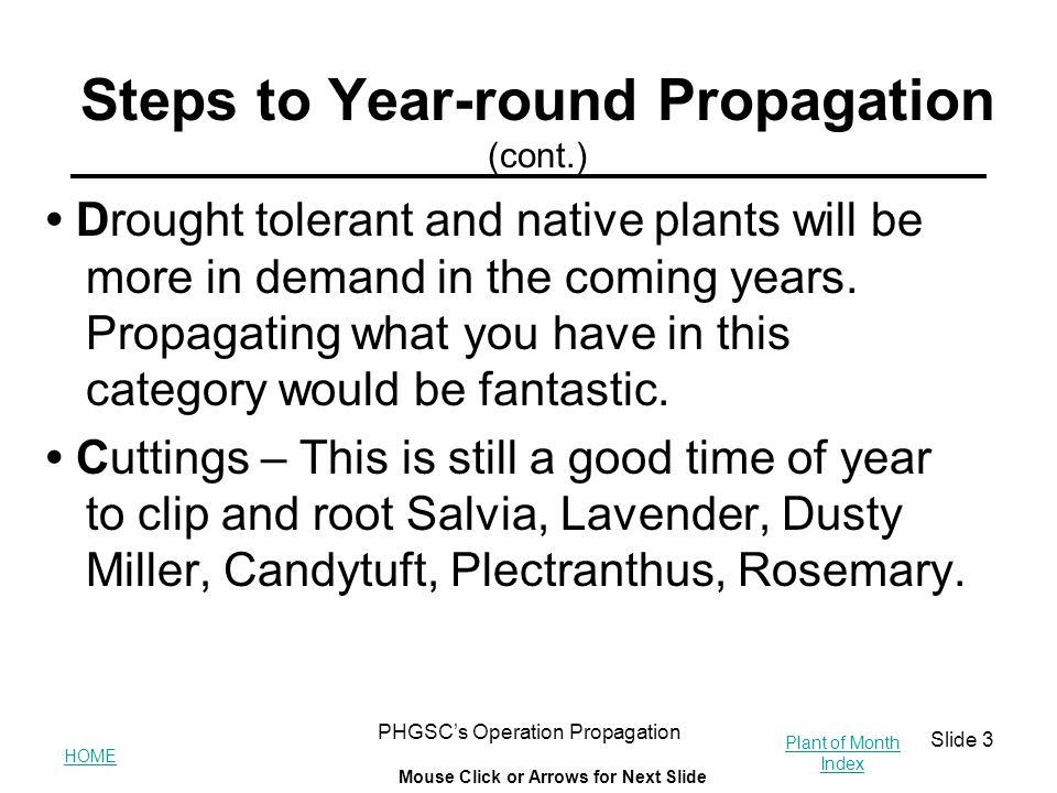 HOME Plant of Month Index Mouse Click or Arrows for Next Slide PHGSC's Operation Propagation Slide 3 Steps to Year-round Propagation (cont.) Drought t
