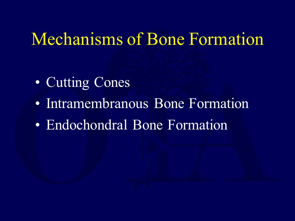 Mechanisms of Bone Formation Cutting Cones Intramembranous Bone Formation Endochondral Bone Formation