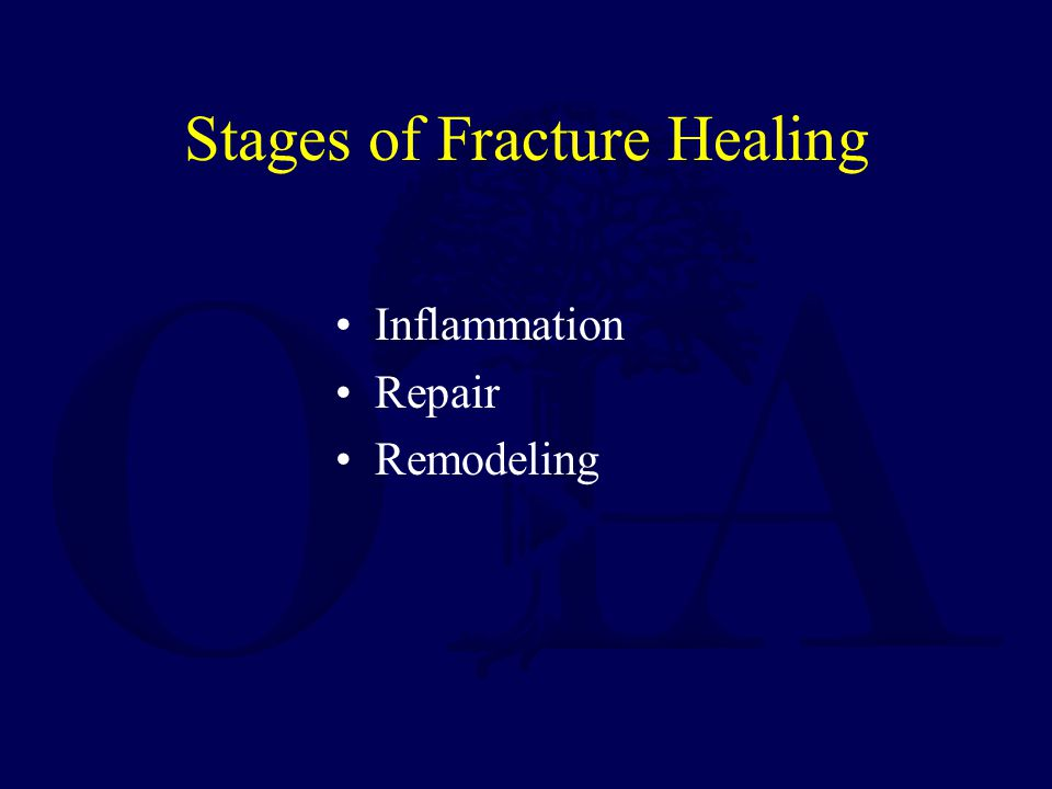 Stages of Fracture Healing Inflammation Repair Remodeling