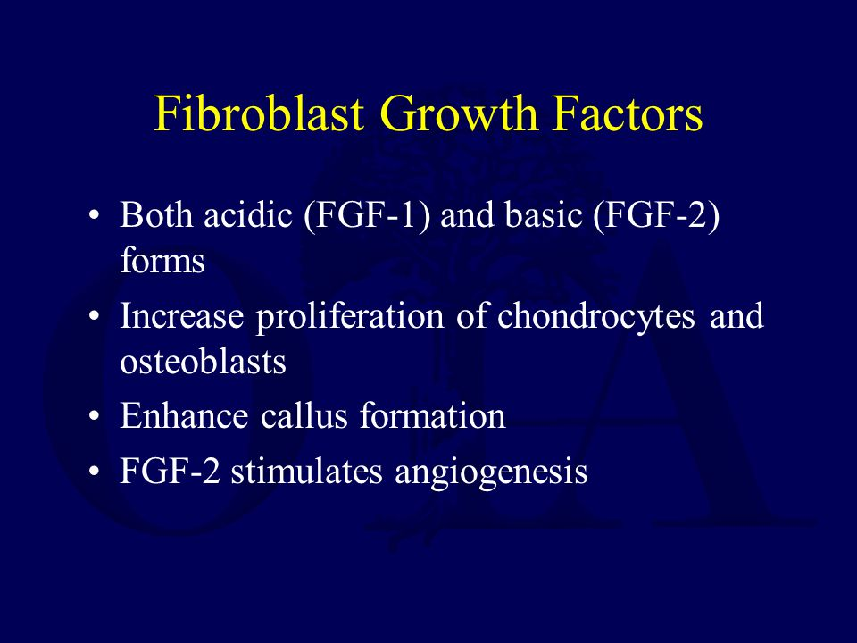 Fibroblast Growth Factors Both acidic (FGF-1) and basic (FGF-2) forms Increase proliferation of chondrocytes and osteoblasts Enhance callus formation FGF-2 stimulates angiogenesis