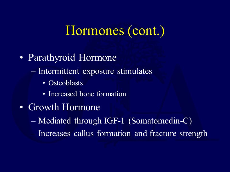 Hormones (cont.) Parathyroid Hormone –Intermittent exposure stimulates Osteoblasts Increased bone formation Growth Hormone –Mediated through IGF-1 (Somatomedin-C) –Increases callus formation and fracture strength