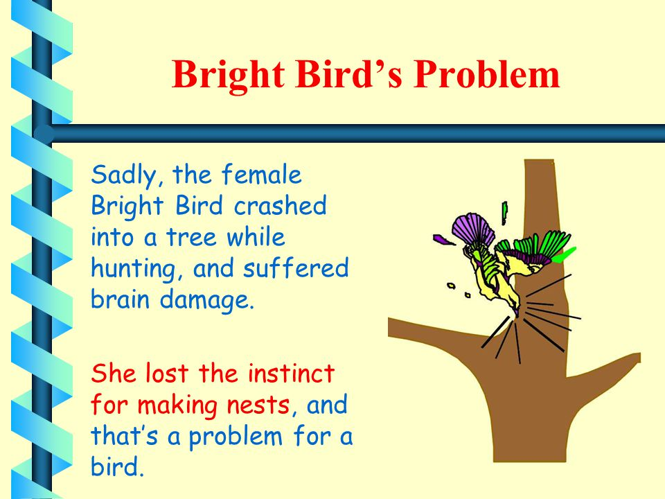 Bright Bird's Problem Sadly, the female Bright Bird crashed into a tree while hunting, and suffered brain damage.