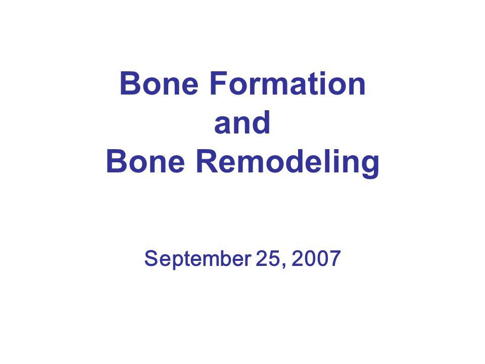 Bone Formation and Bone Remodeling September 25, 2007