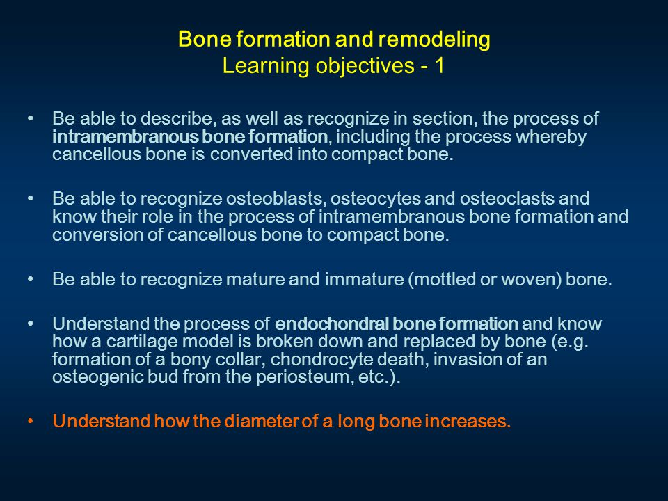 Bone formation and remodeling Learning objectives - 1 Be able to describe, as well as recognize in section, the process of intramembranous bone formation, including the process whereby cancellous bone is converted into compact bone.