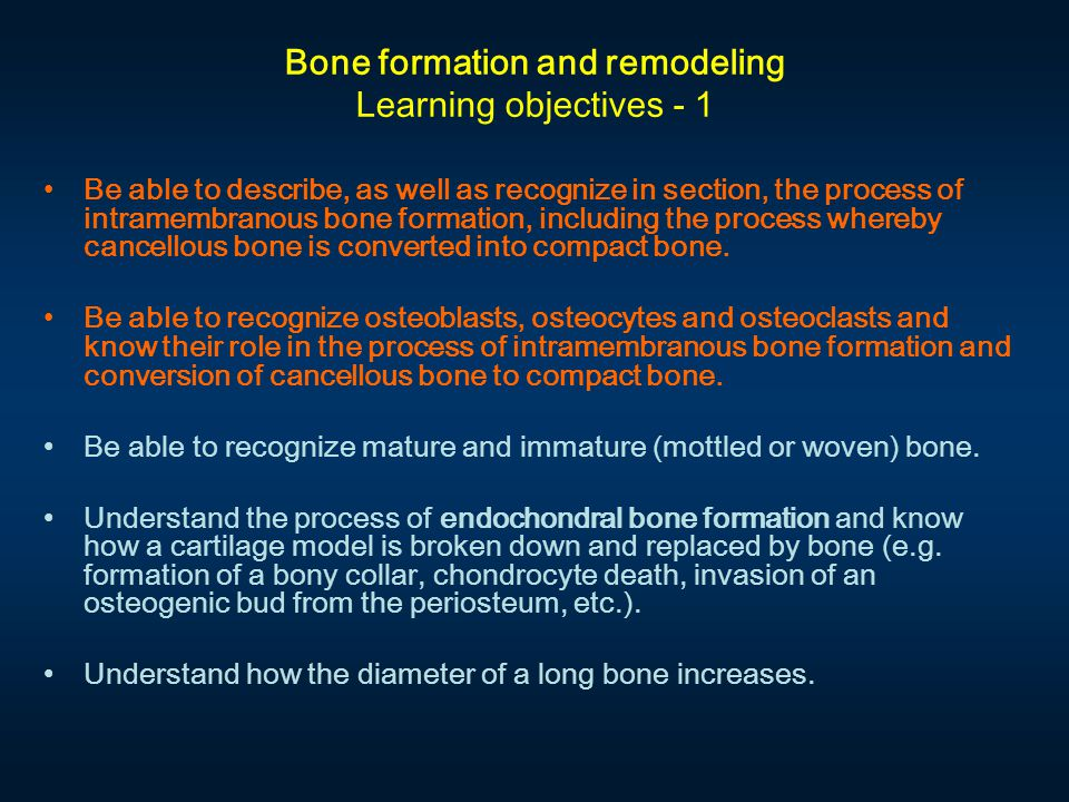 Intramembranous bone formation. #46-HE; #46-M; #120 Periosteum Bone trabecula(e) or spicules