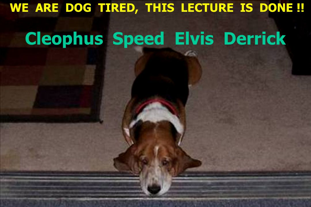 WE ARE DOG TIRED, THIS LECTURE IS DONE !! Cleophus Speed Elvis Derrick