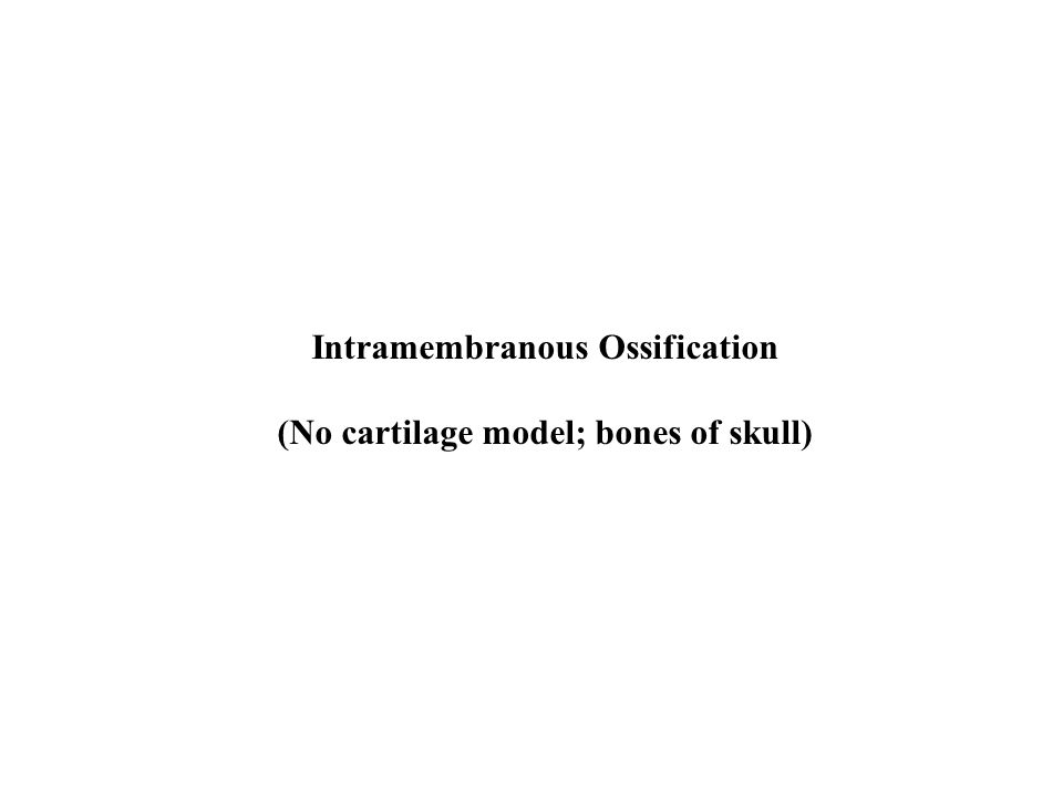 Intramembranous Ossification (No cartilage model; bones of skull)