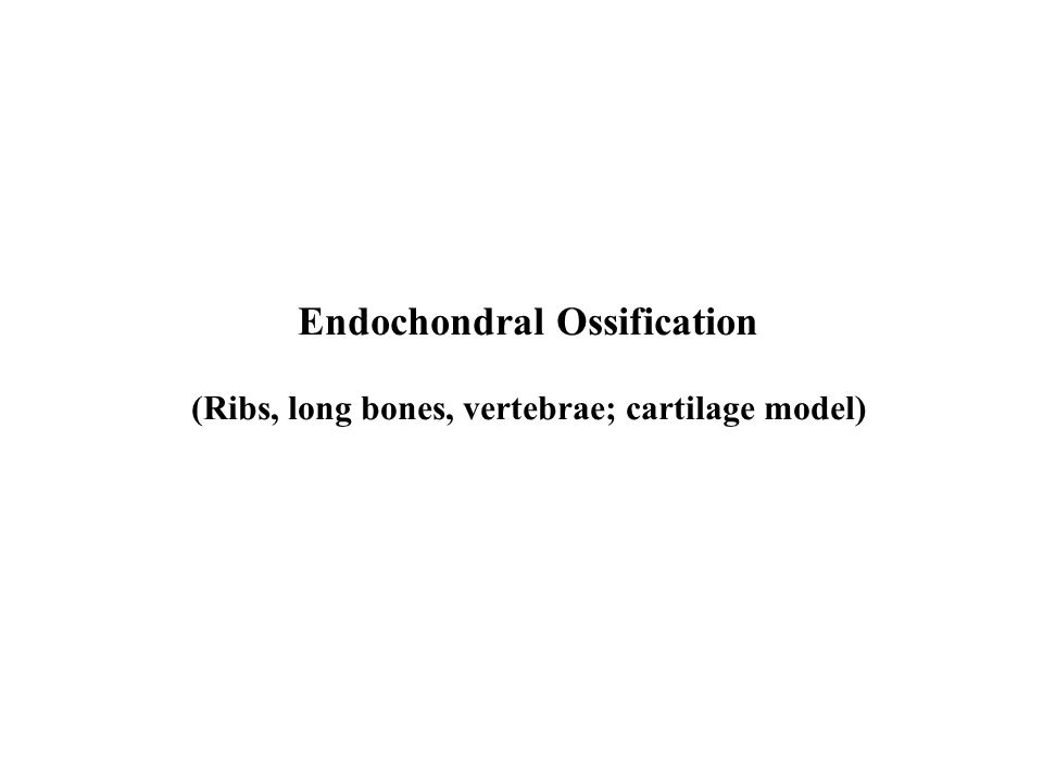Endochondral Ossification (Ribs, long bones, vertebrae; cartilage model)