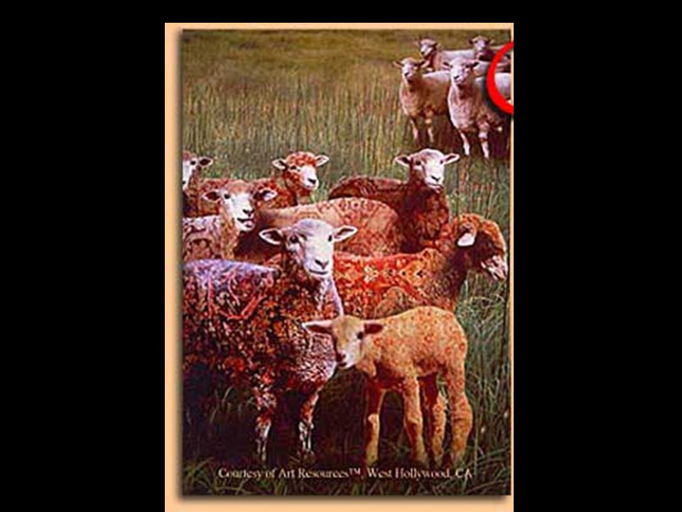 Oriental rugs are made by individuals, by families, and by employed rug factory workers.