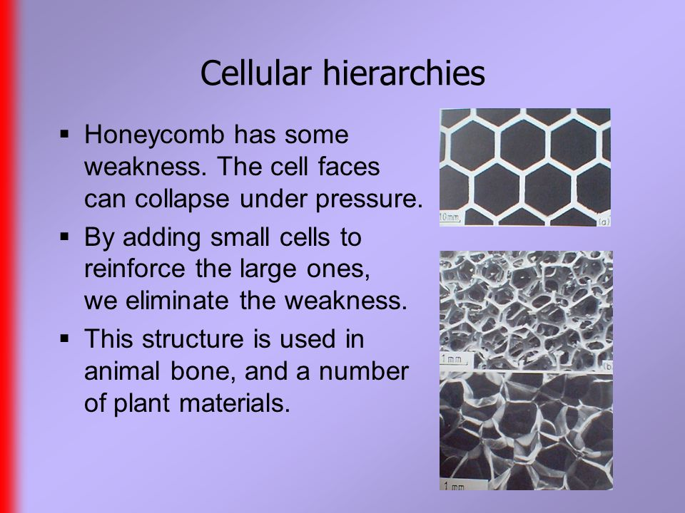 Cellular hierarchies  Honeycomb has some weakness.