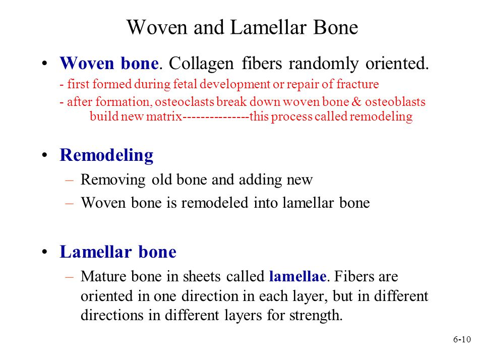 6-10 Woven and Lamellar Bone Woven bone.Collagen fibers randomly oriented.