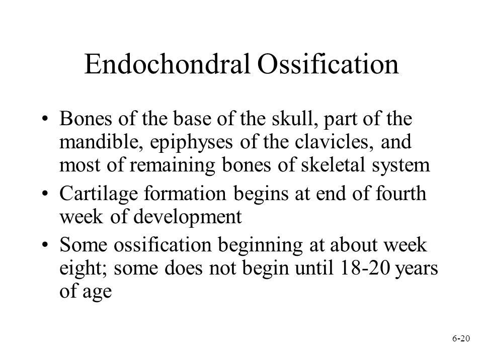 6-20 Endochondral Ossification Bones of the base of the skull, part of the mandible, epiphyses of the clavicles, and most of remaining bones of skelet