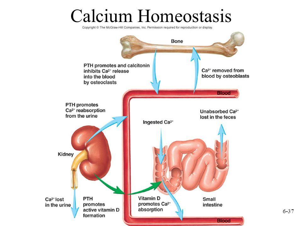 6-37 Calcium Homeostasis
