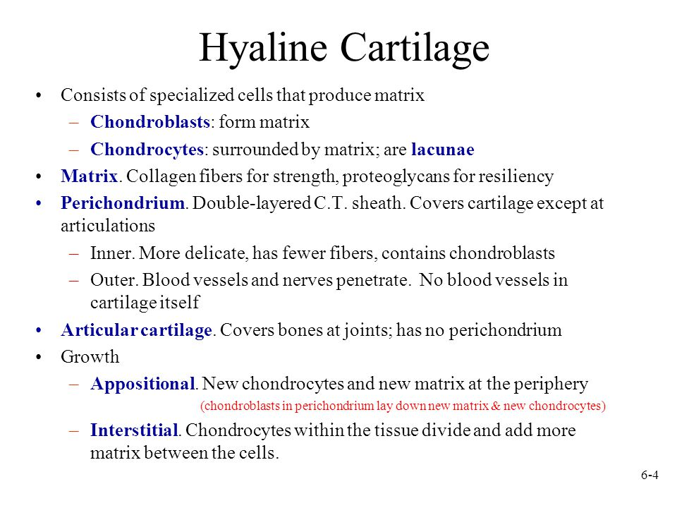 6-4 Hyaline Cartilage Consists of specialized cells that produce matrix –Chondroblasts: form matrix –Chondrocytes: surrounded by matrix; are lacunae Matrix.