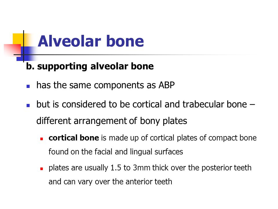 b. supporting alveolar bone has the same components as ABP but is considered to be cortical and trabecular bone – different arrangement of bony plates