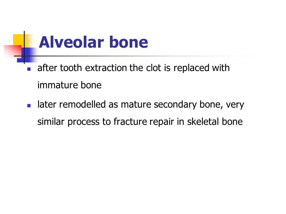 after tooth extraction the clot is replaced with immature bone later remodelled as mature secondary bone, very similar process to fracture repair in s