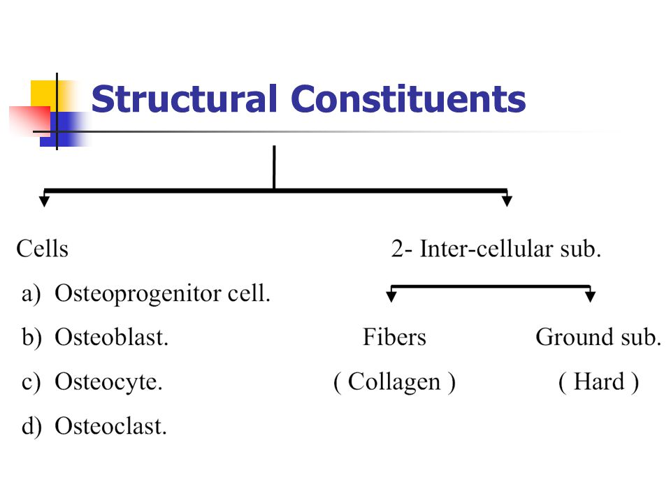 Structural Constituents