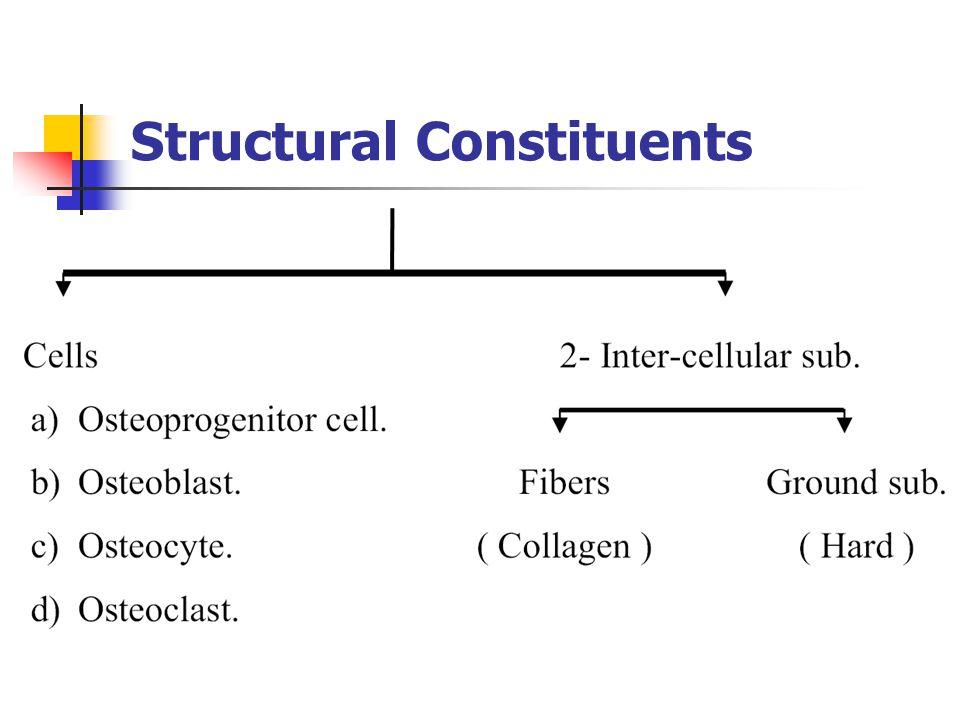 The alveolar process is that bone containing the alveoli.