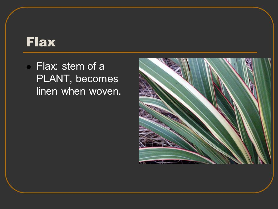 Flax Flax: stem of a PLANT, becomes linen when woven.