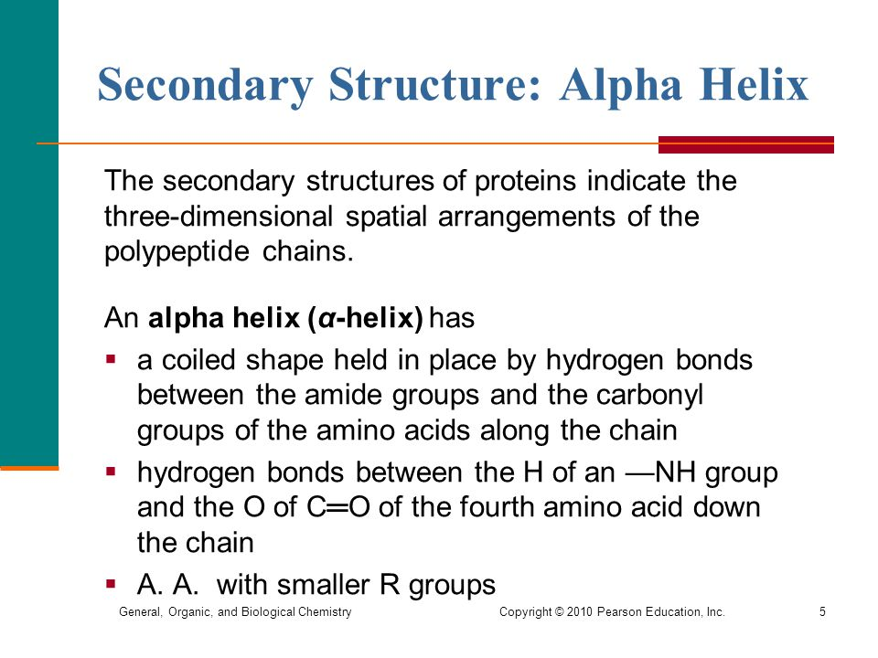 General, Organic, and Biological Chemistry Copyright © 2010 Pearson Education, Inc.5 Secondary Structure: Alpha Helix The secondary structures of proteins indicate the three-dimensional spatial arrangements of the polypeptide chains.