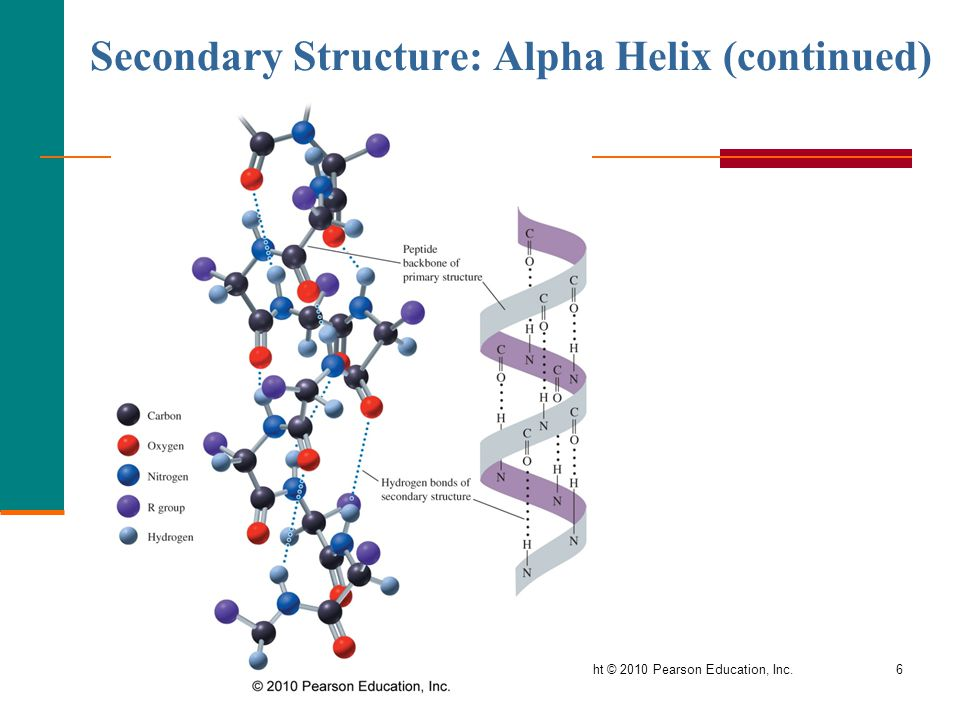 General, Organic, and Biological Chemistry Copyright © 2010 Pearson Education, Inc.6 Secondary Structure: Alpha Helix (continued)