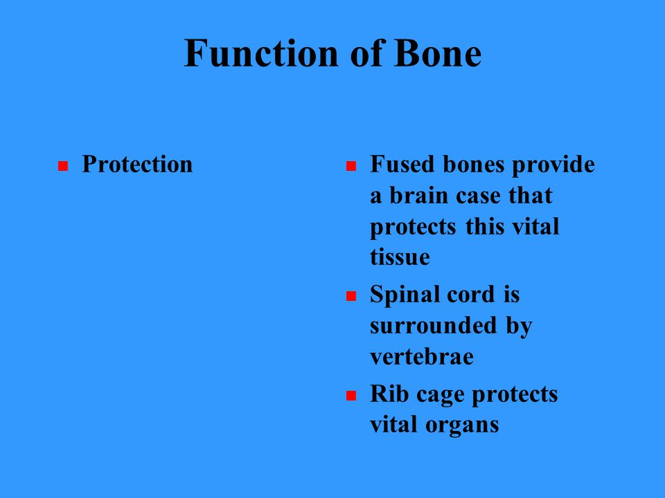Function of Bone Protection Fused bones provide a brain case that protects this vital tissue Spinal cord is surrounded by vertebrae Rib cage protects vital organs