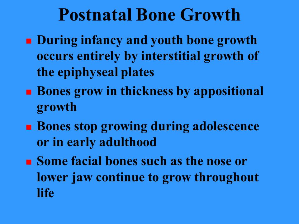 Postnatal Bone Growth During infancy and youth bone growth occurs entirely by interstitial growth of the epiphyseal plates Bones grow in thickness by appositional growth Bones stop growing during adolescence or in early adulthood Some facial bones such as the nose or lower jaw continue to grow throughout life