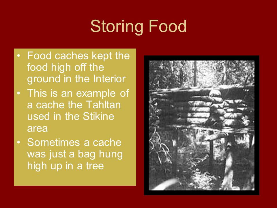 Storing Food Food caches kept the food high off the ground in the Interior This is an example of a cache the Tahltan used in the Stikine area Sometime