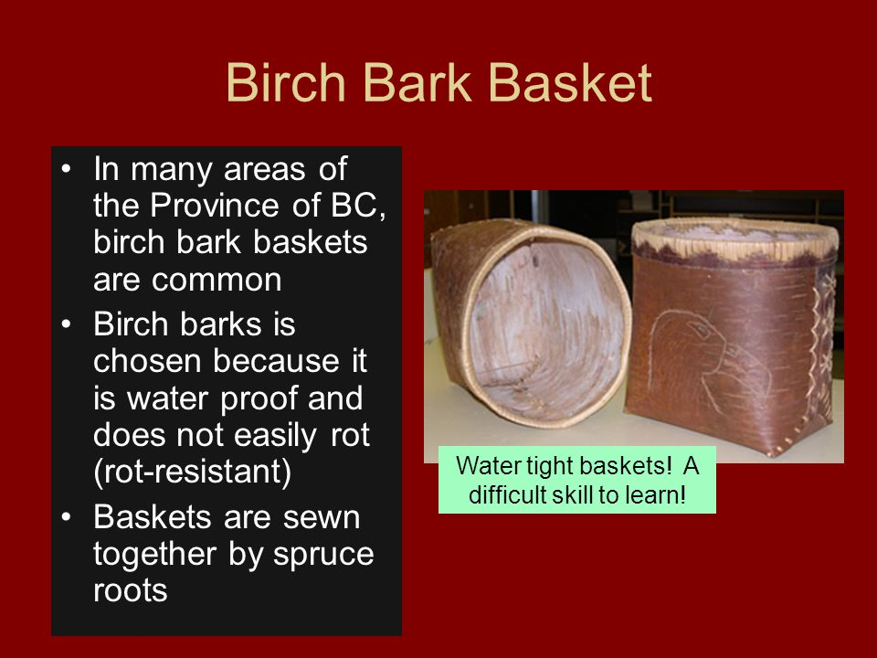 Birch Bark Basket In many areas of the Province of BC, birch bark baskets are common Birch barks is chosen because it is water proof and does not easi