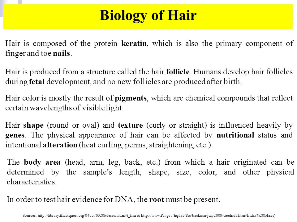 Hair shape (round or oval) and texture (curly or straight) is influenced heavily by genes.
