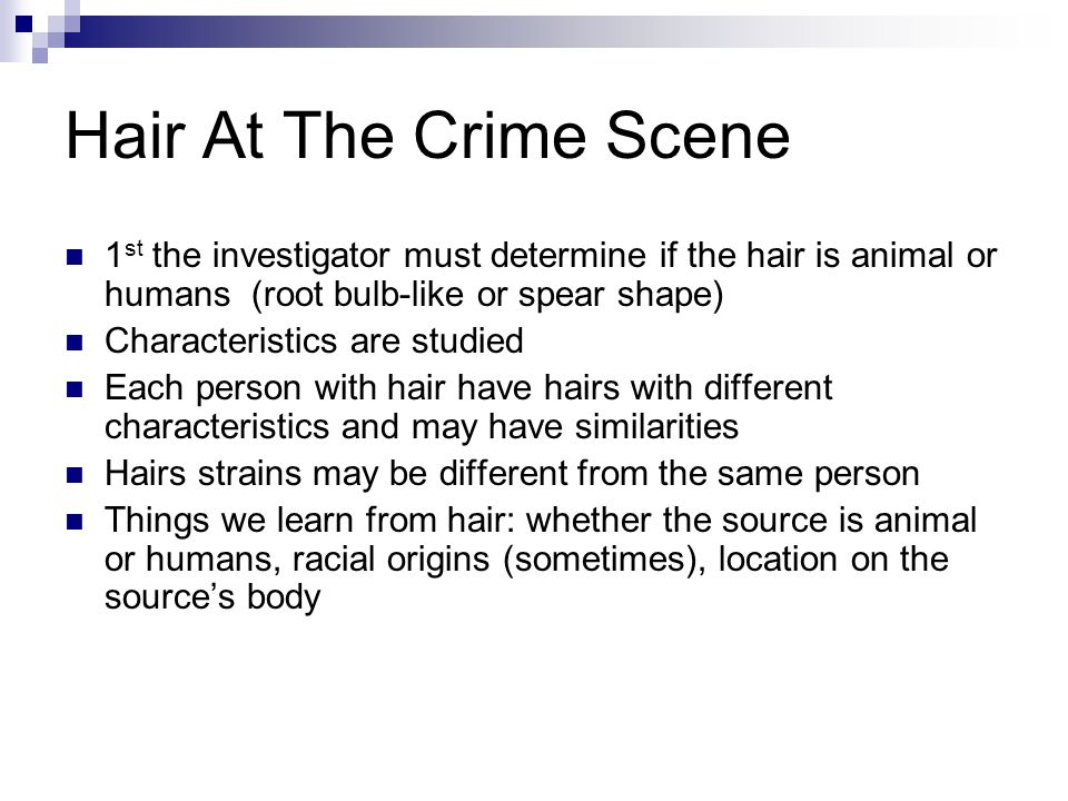 Hair At The Crime Scene 1 st the investigator must determine if the hair is animal or humans (root bulb-like or spear shape) Characteristics are studied Each person with hair have hairs with different characteristics and may have similarities Hairs strains may be different from the same person Things we learn from hair: whether the source is animal or humans, racial origins (sometimes), location on the source's body