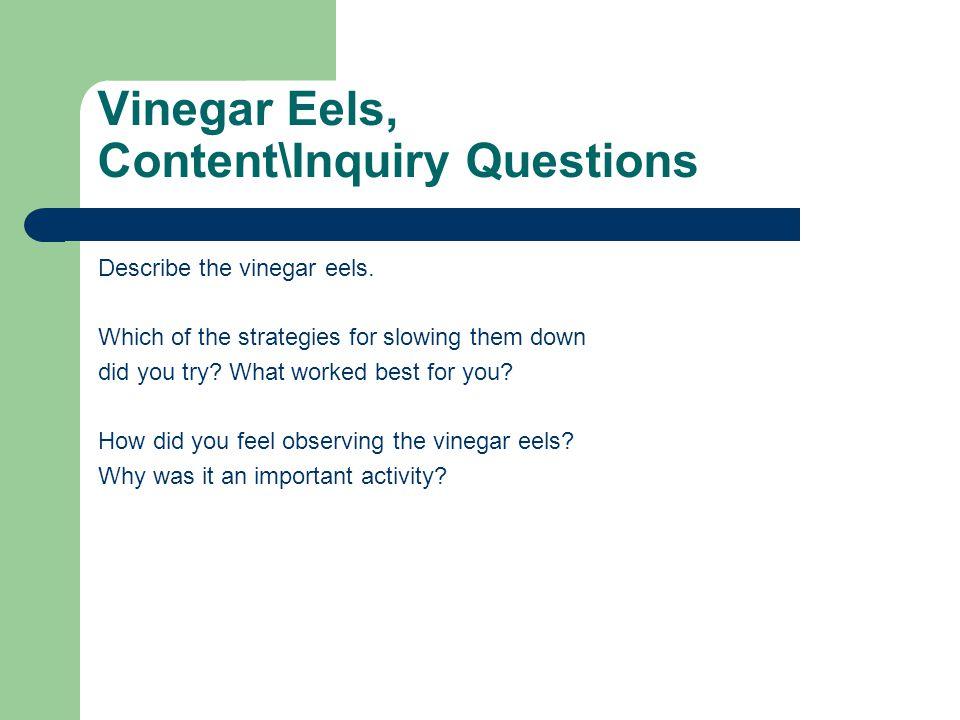 Vinegar Eels, Content\Inquiry Questions Describe the vinegar eels.