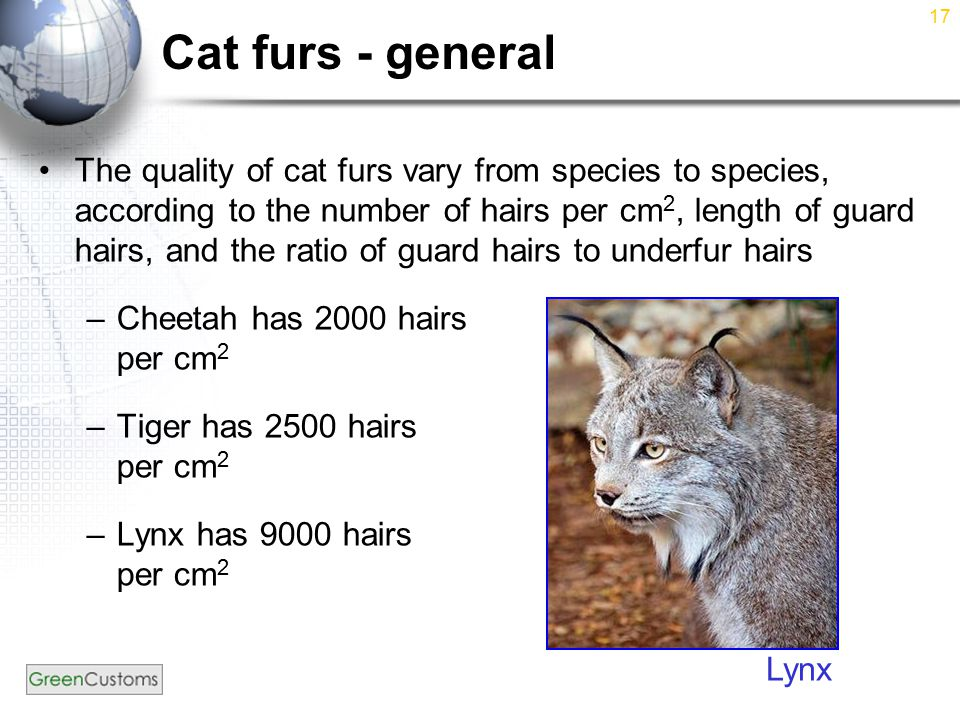 17 Cat furs - general The quality of cat furs vary from species to species, according to the number of hairs per cm 2, length of guard hairs, and the ratio of guard hairs to underfur hairs –Cheetah has 2000 hairs per cm 2 –Tiger has 2500 hairs per cm 2 –Lynx has 9000 hairs per cm 2 Lynx