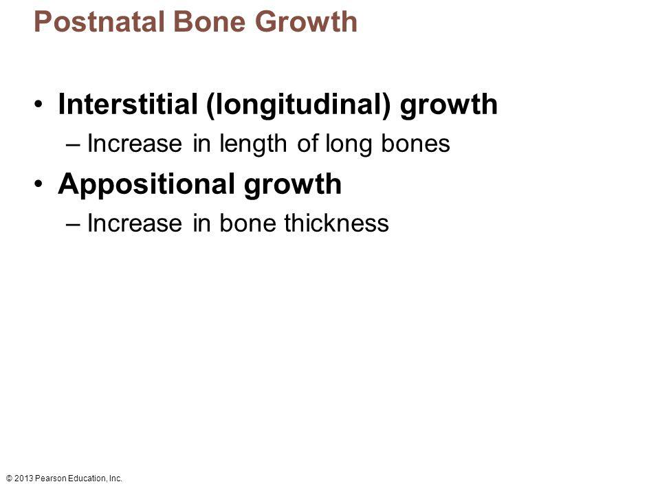 © 2013 Pearson Education, Inc. Postnatal Bone Growth Interstitial (longitudinal) growth –Increase in length of long bones Appositional growth –Increas