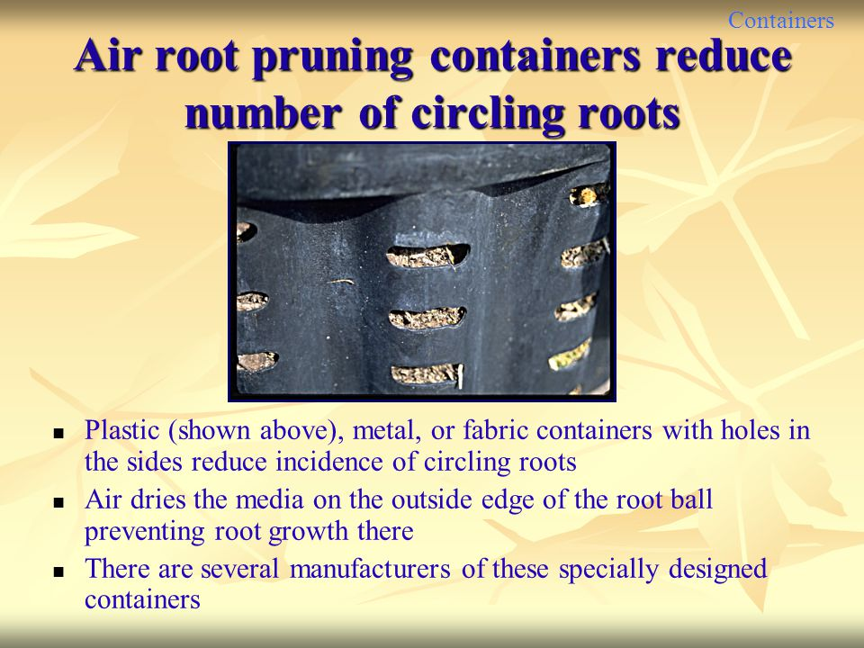 Containers Air root pruning containers reduce number of circling roots Plastic (shown above), metal, or fabric containers with holes in the sides redu