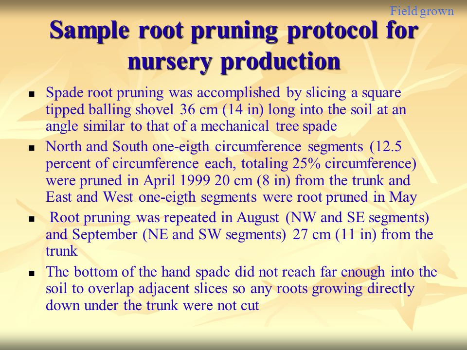 Field grown Sample root pruning protocol for nursery production Spade root pruning was accomplished by slicing a square tipped balling shovel 36 cm (1