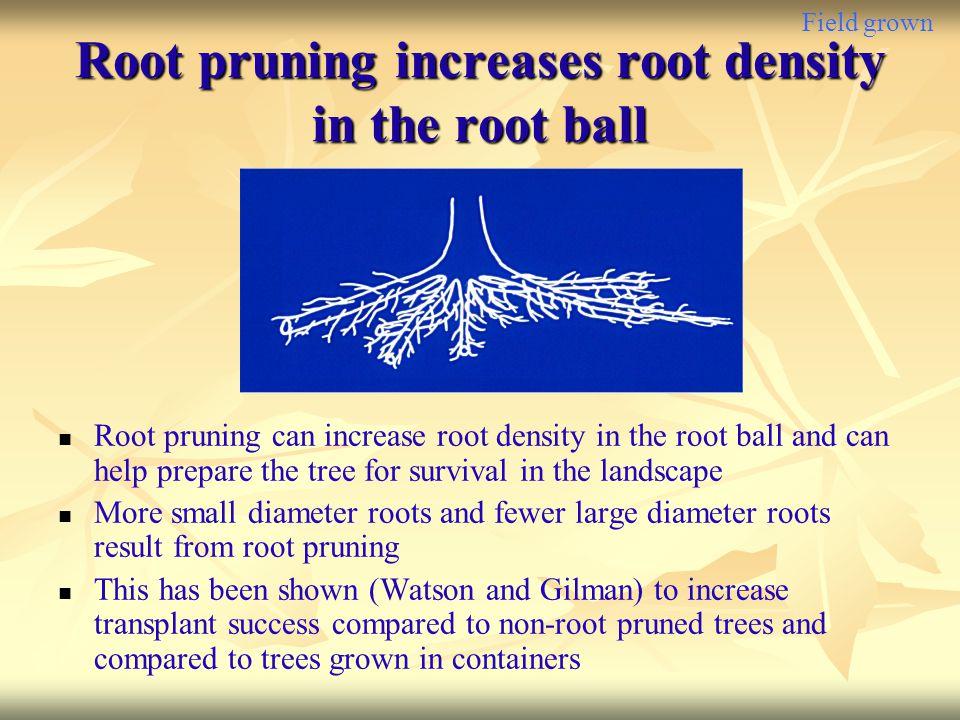 Field grown Root pruning increases root density in the root ball Root pruning can increase root density in the root ball and can help prepare the tree
