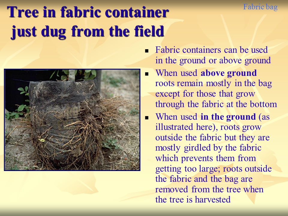 Fabric bag Tree in fabric container just dug from the field Fabric containers can be used in the ground or above ground When used above ground roots r