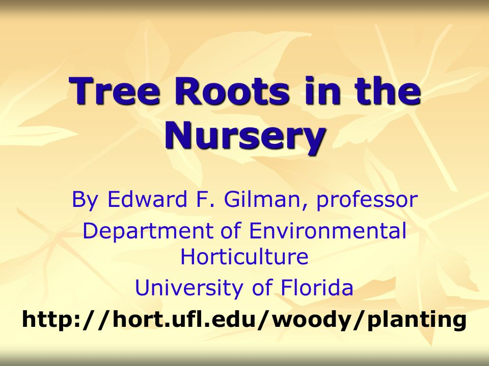 Tree Roots in the Nursery By Edward F. Gilman, professor Department of Environmental Horticulture University of Florida http://hort.ufl.edu/woody/plan