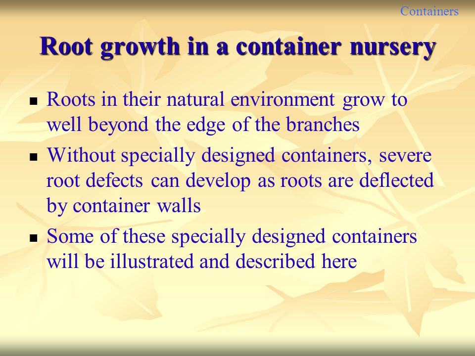 Containers Root growth in a container nursery Roots in their natural environment grow to well beyond the edge of the branches Without specially design