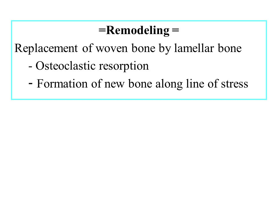 =Remodeling = Replacement of woven bone by lamellar bone - Osteoclastic resorption - Formation of new bone along line of stress