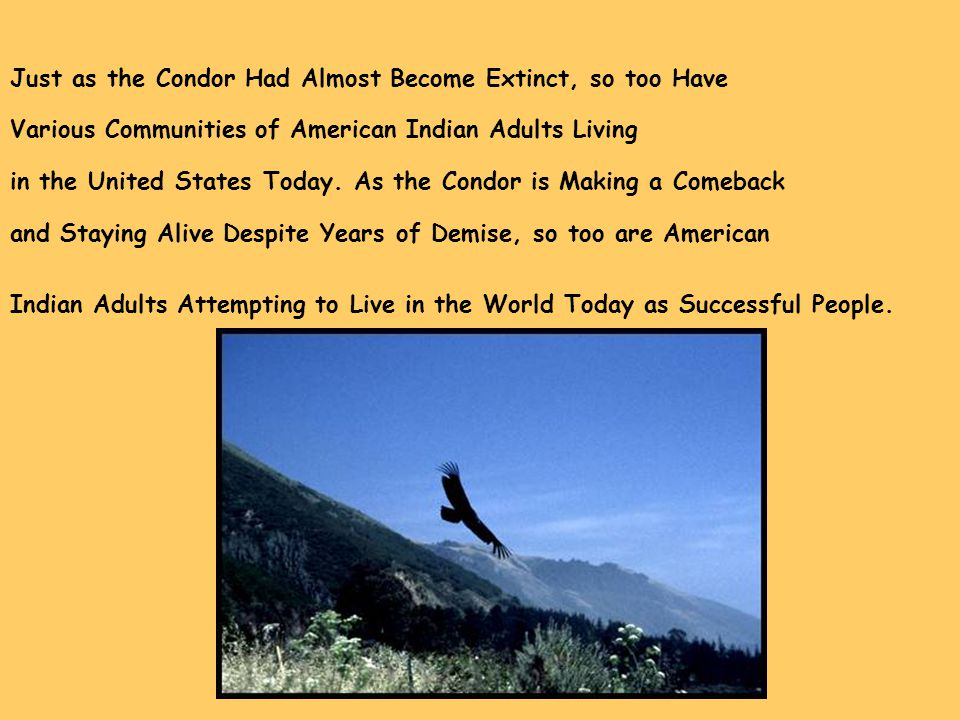 Just as the Condor Had Almost Become Extinct, so too Have Various Communities of American Indian Adults Living in the United States Today. As the Cond