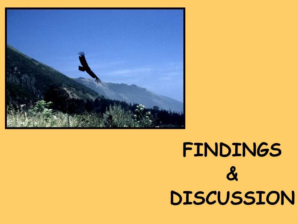 FINDINGS & DISCUSSION
