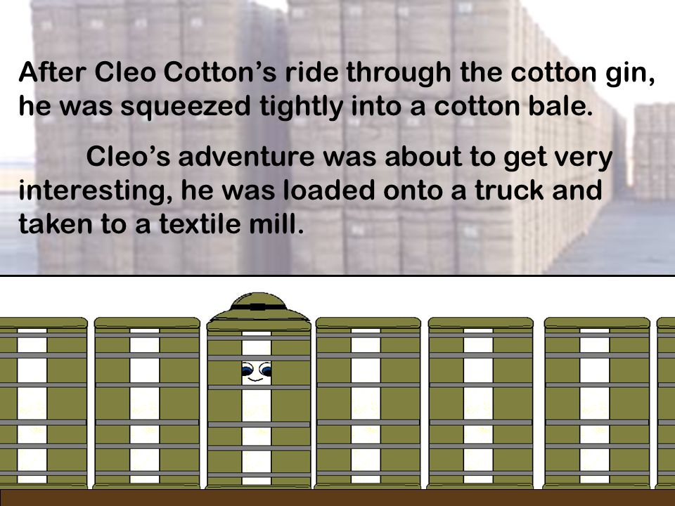After Cleo Cotton's ride through the cotton gin, he was squeezed tightly into a cotton bale.