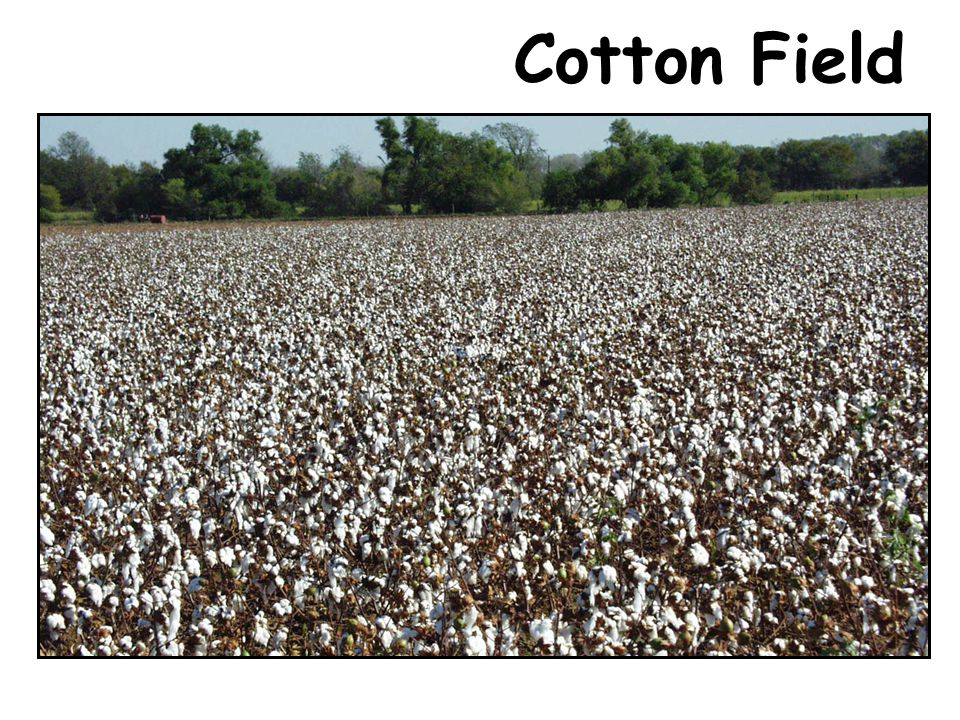 With the sun shining down, all the moisture left his cotton head.